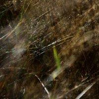 Травы , ветрами битые... :: Валерия  Полещикова