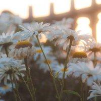 на закате :: Тася Тыжфотографиня
