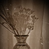 Ах, как же на людей судьбой своей похожи засохшие цветы! :: Tatiana Markova