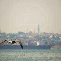 Стамбул :: Karina Sholokhova