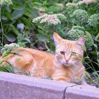 Рыжий кот на газоне :: Игорь Попов
