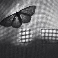 Бабочка :: Иван Смирнов
