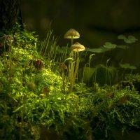 грибы :: Алексей Строганов