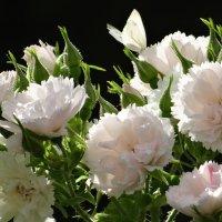 Розы и бабочка. :: Алексей Цветков