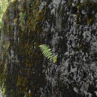 растительность на стене :: Михаил Жуковский