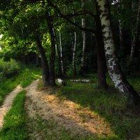 У края леса :: Андрей Лукьянов