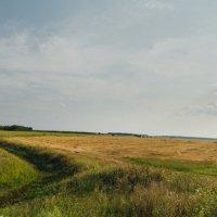 Русское поле :: Алексей Жариков