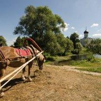 Боголюбовские лошадки :: Наталья Левина
