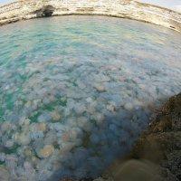 Медузы :: Наталья Крахмалева