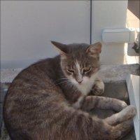 Мама-кошка :: Нина Корешкова