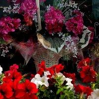 "Украшение магазина ""Цветы"" :: Елена Семигина"