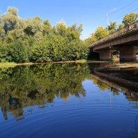 Озеро Прорва  в черте города :: Андрей Заломленков