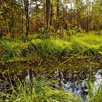 Омут в лесу.. :: Vladimir Semenchukov