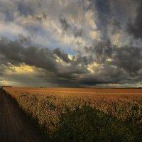 Август, и скоро осень :: Сергей Жуков