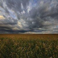 Август, и скоро осень 2 :: Сергей Жуков