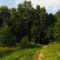 Просто лето в парке :: Андрей Лукьянов