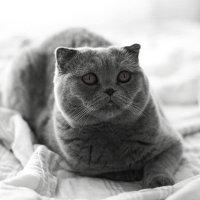 Просто  красавица! :: Anna Klaos