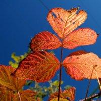 Уж небо осенью дышало.. :: Андрей Заломленков