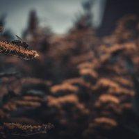 Пчела :: Артем