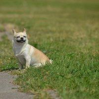 Собака-улыбака :: John Smith