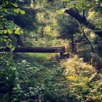Где-то в лесу :: Александр