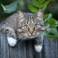 сторожевой кот :: Кристина Щукина