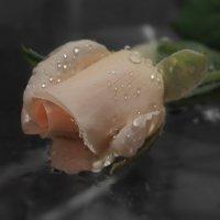 Бутон прекрасного цветка,  как нераскрывшийся вулкан, :: Людмила Богданова (Скачко)