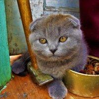 С молотком и болтами(любимое место)... :: Sergey Gordoff
