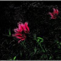 Пылающие лилии :: Нина Корешкова