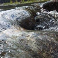 Горный Алтай. Река Чемалка :: Алена Суворова