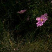 Цветок в парке 32. :: Василий Ярославцев
