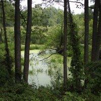 вид на болото :: оксана