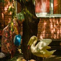 кормление гордой птицы :: cfysx