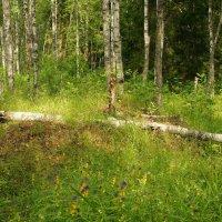 На лесной полянке в солнечный денёк... :: марк