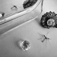 Натюрморт с комаром :: Marina Pr. **