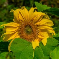 Солнечный цвет :: Валерий Симонов