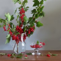 Рубиновые ягодки :: SaGa