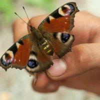 Бабочка в руках мальчишки :: Albina