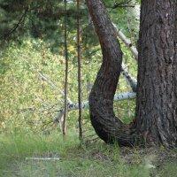 Загадки леса..... :: Елена Антипова
