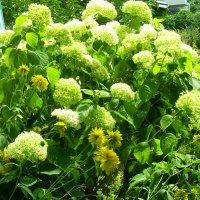 Летние цветы :: татьяна