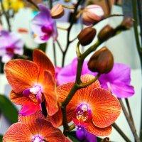 Орхидея :: Aleks Ben Israel