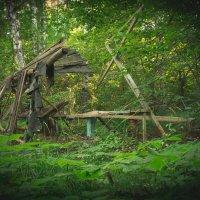 В Чувашских лесах :: Роман Царев