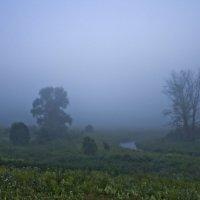 Туман, туман... :: Senior Веселков Петр