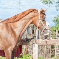 Съемка лошади :: Юлия Дроздова