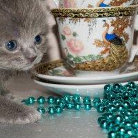 серый котейка :: Анна