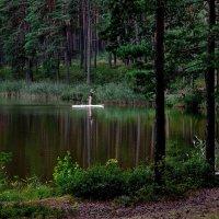 Про озеро в лесу.... :: Alex S.