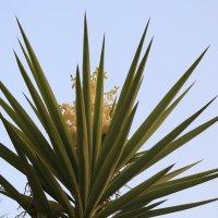 цветет пальма :: Александра