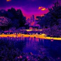 Синий сон фламинго :: Nina Yudicheva