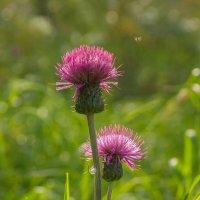 Мошка и цветы :: Олег Кулябин