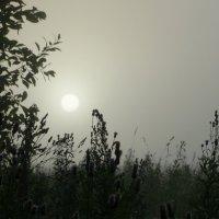 Утро туманное :: Валерий Чепкасов